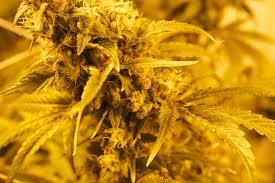 Snoop Dogg Marijuana Stocks